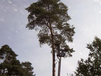 afbeelding Bomen zagen Bennekom 1