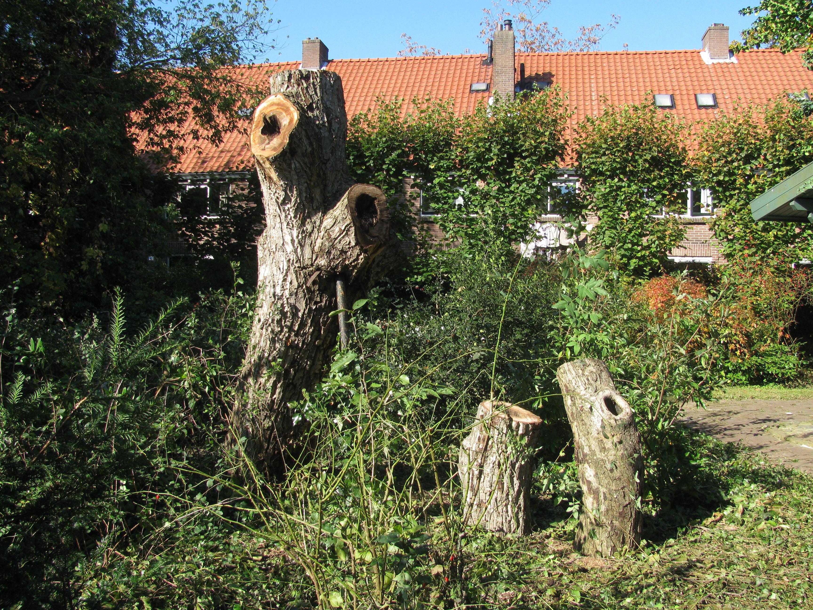 afbeelding Noot verwijderen Nijmegen 9